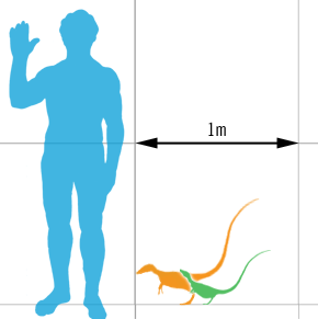 Size of adult and sub-adult specimens, compared with a human. Author: Matt Martyniuk