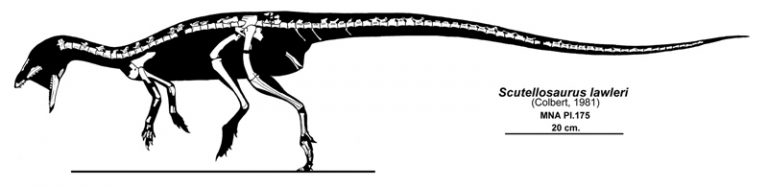 Skeletal reconstruction showing known material. Author: Jaime A. Headden