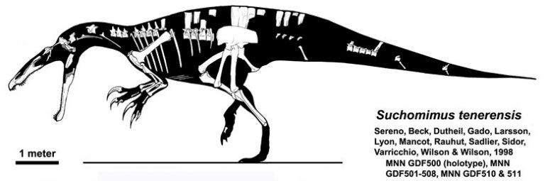 Skeletal restoration combining several specimens. By Jaime A. Headden