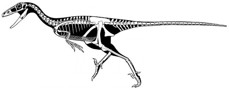 Skeletal restoration of T. inequalis by Scott Hartman