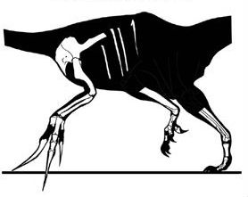 Skeletal showing the known material of Therizinosaurus cheloniformes by Jaime A. Headden
