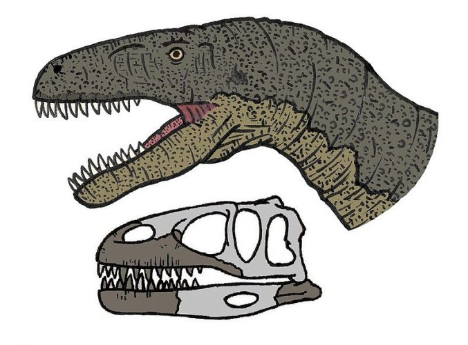 Skull and life restoration of Megalosaurus bucklandii skull. Megalosaurus was one of the first described dinosaurs. Author: Conty