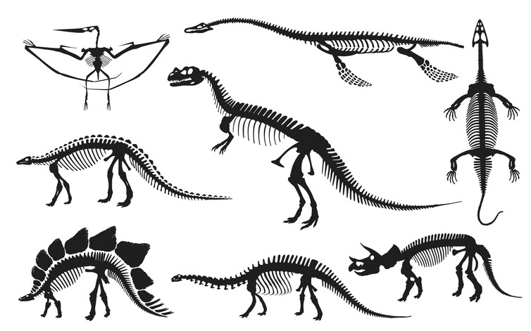 So many fossils. Shutterstock