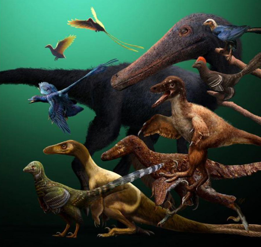 New research using the most comprehensive study of feathered dinosaurs and early birds has revised the evolutionary relationships of dinosaurs at the origin of birds.  CREDIT: Julius Csotonyi