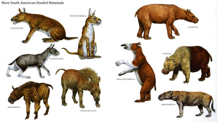 South American hoofed mammals, during the Miocene and Paleocene periods