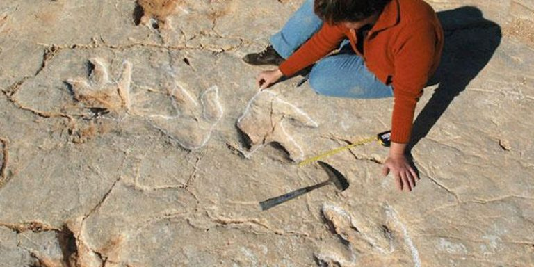 Spanish Paleontological Team Find Over 700 fish-eating Dinosaur Footprints in Portugal