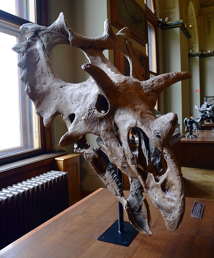 Spiclypeus_Vienna_Natural_History_Museum