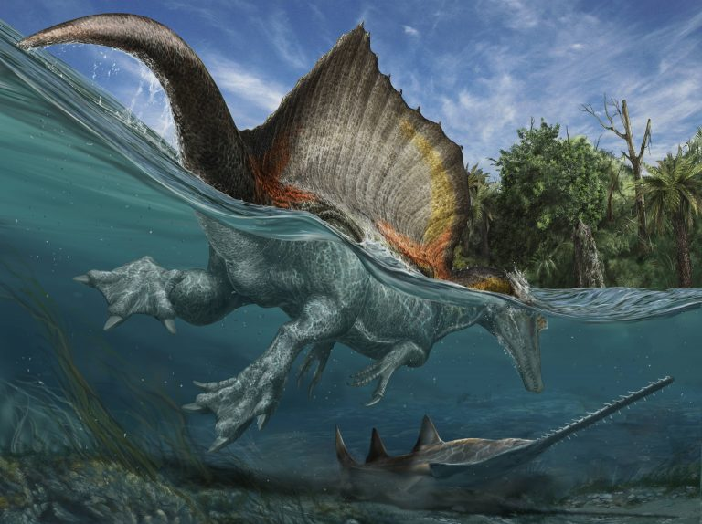 Spinosaurus hunting Onchopristis by atrox1 on DeviantArt