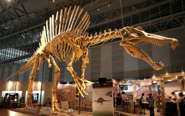 Spinosaurus, an important dinosaur of Africa. Photo Credit: Wikimedia Commons