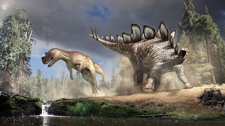 Stegosaurus strikes out by palaeoartist Robert Nicholls This artist's reconstruction shows a Stegosaurus striking a powerful blow to one of its predators, a Ceratosaurus.