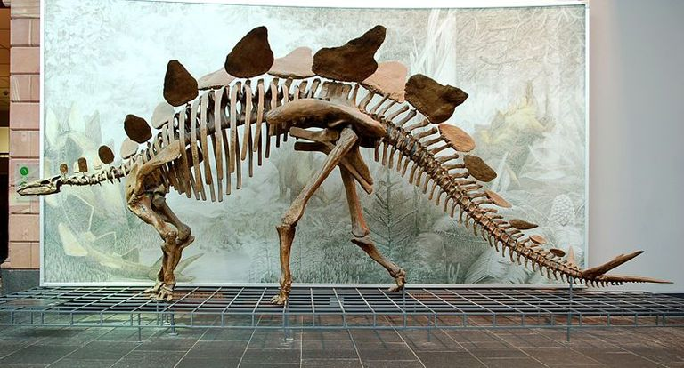Stegosaurus, the classic Jurassic stegosaur that gave this breed its name (Senckenberg Museum)
