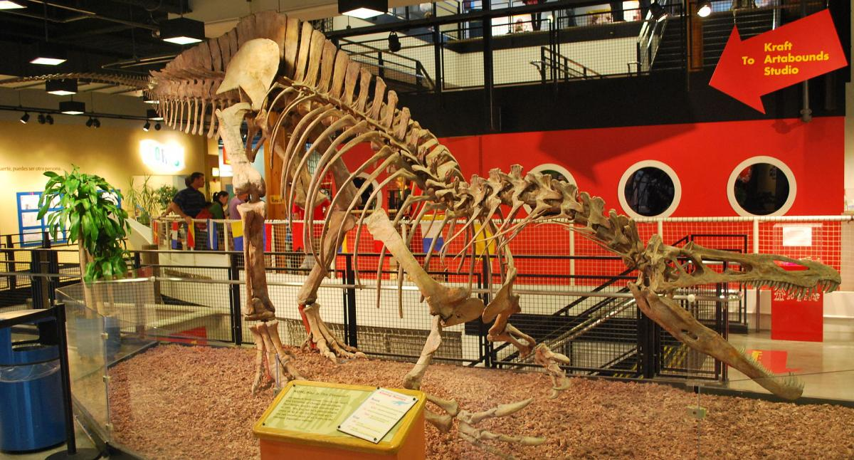 Mounted skeleton, Chicago Children's Museum.