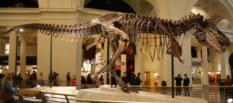 Sue (Tyrannosaurus rex) at the Field Museum, Chicago, IL. Photo by Dallas Krentzel – Flickr
