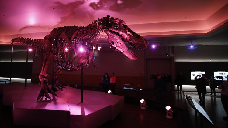 Sue the T. rex is unveiled in December 2018 in a new space at the Field Museum of Chicago, in the upstairs Griffin Halls of Evolving Planet.