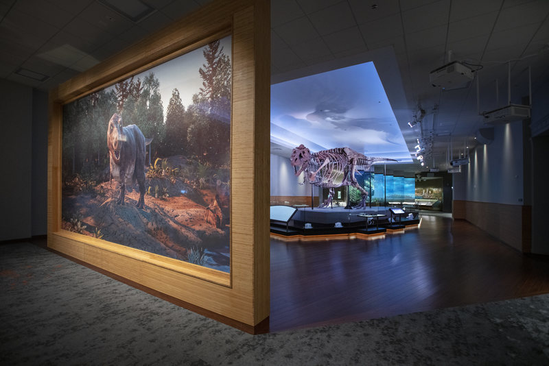 Sue's colorful new digs feature renderings of environments they once roamed. MARTIN BAUMGAERTNER/FIELD MUSEUM