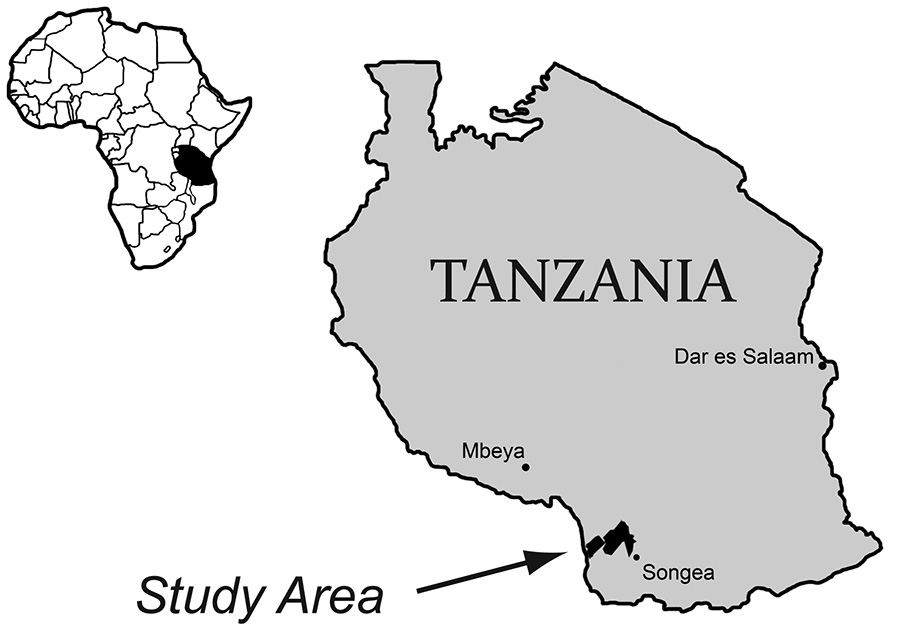 Bones of Nyasasaurus parringtoni were collected in southwest Tanzania in the 1930s from the Manda beds, which preserves fossils of many animals from the Triassic Period of Earth's history.U of Washington