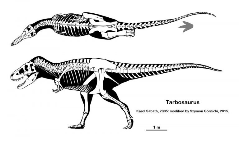 Tarbosaurus skeleton by Szymoonio