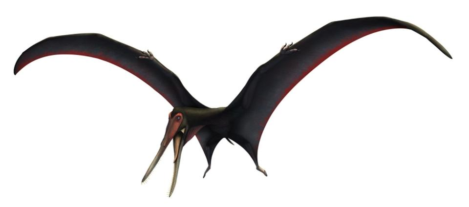 Illustration of the new described pterosaur species Targaryendraco wiedenrothi by Vítor Silva, from Pêgas et al. 2019.  V. SILVA/PÊGAS ET AL. 2019
