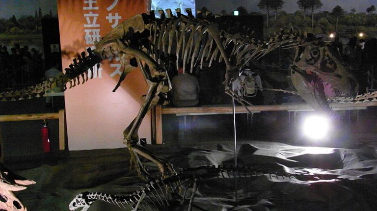 Teratophoneus curriei skeleton in Japan. Author ★Kumiko★