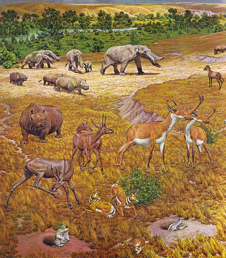 An artist's interpretation of ancient North American fauna. The new study revealed that elephant-like gomphotheres, rhinos, horses and antelopes with slingshot-shaped horns were among the species recovered near Beeville, Texas, by Great Depression-era fossil hunters. Image credit: Jay Matternes / Smithsonian Institution.