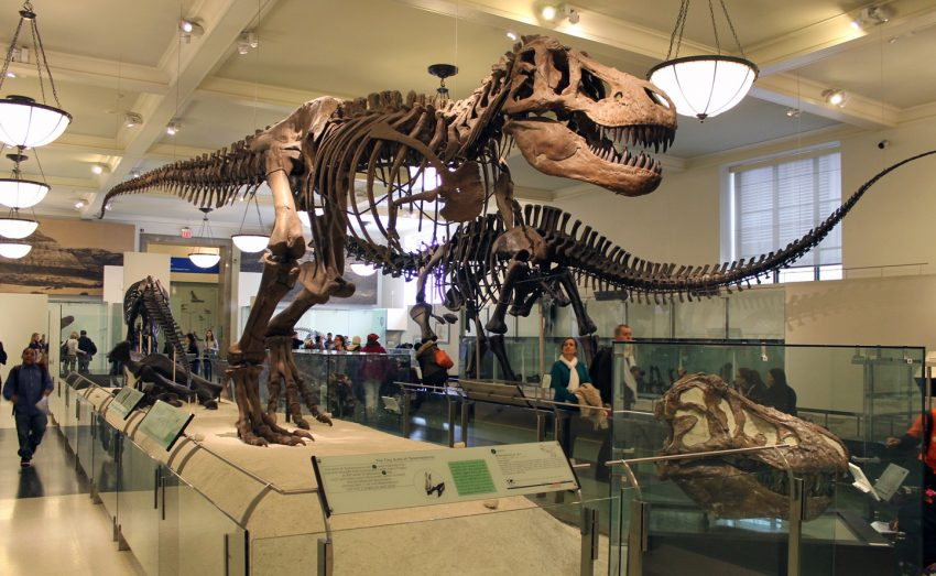The Best Dinosaur Museums in the U.S.