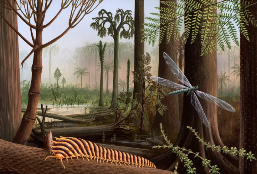 The Carboniferous Period