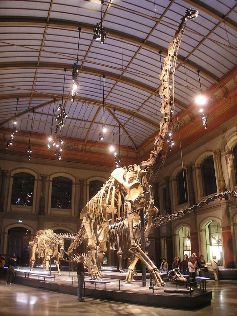 The Dinosaur Hall seen from the entrance, with the skeleton of Giraffatitan (formerly Brachiosaurus) brancai in the center. Photo by Axel Mauruszat