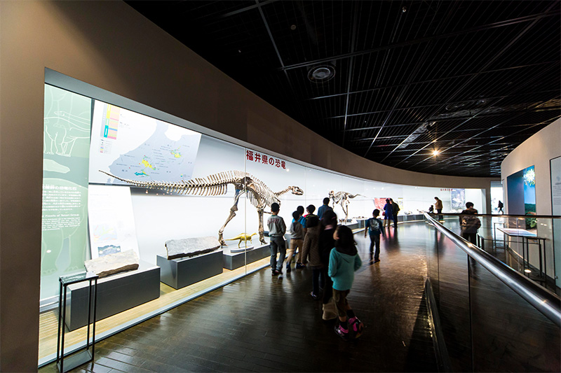 The Dinosaurs in Fukui area showcases fossils, reconstructed skeletons, and models of fukuisaurus and other locally discovered species.