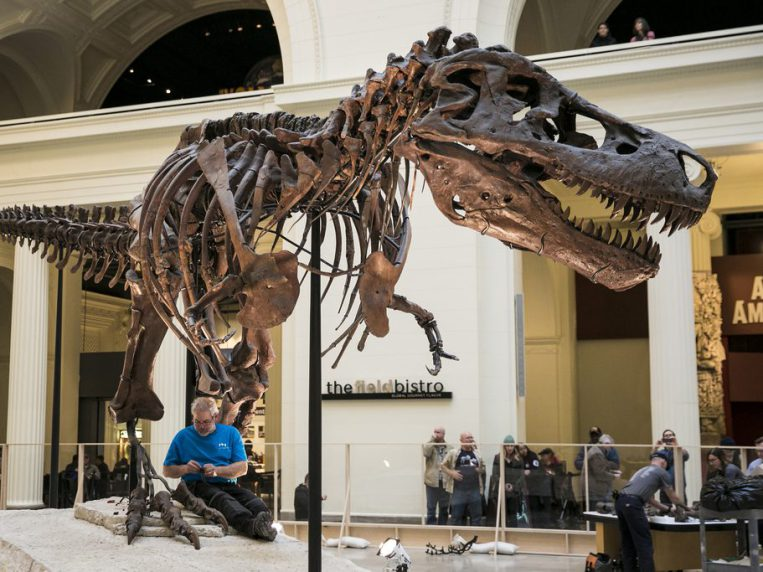 The Field Museum began the de-installation of SUE the Tyrannosaurus rex from Stanley Field Hall earlier this year. | Sun-Times file photo