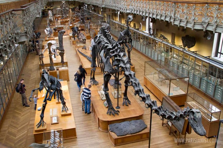 The History Of Paleontology