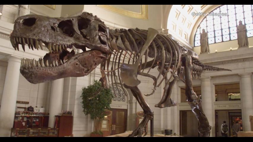 The Tyrannosaurus Rex skeleton known as Sue stands on display at Union Station in Washington D.C. (Mark Wilson/Newsmakers)