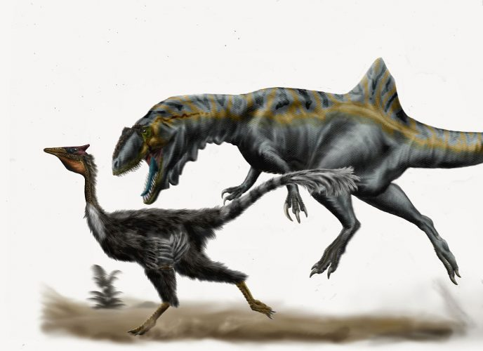 The carcharodontosaurid Concavenator corovatus ambushing the ornithomimosaurian Pelecanimimus polydon in the Early Cretaceous of Las Hoyas, Spain. Author: Durbed