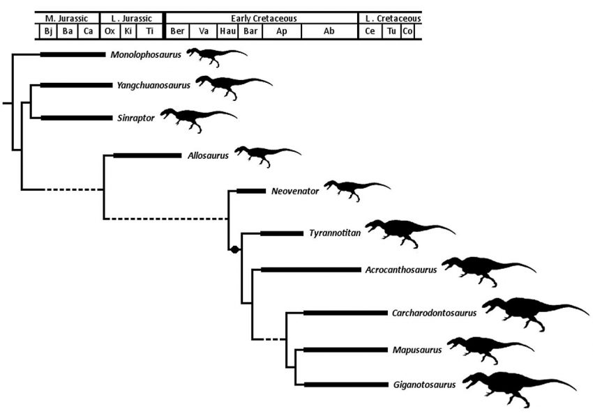 The cladogram of the classification of Allosauroidea by Drew R. Eddy, Julia A. Clarke