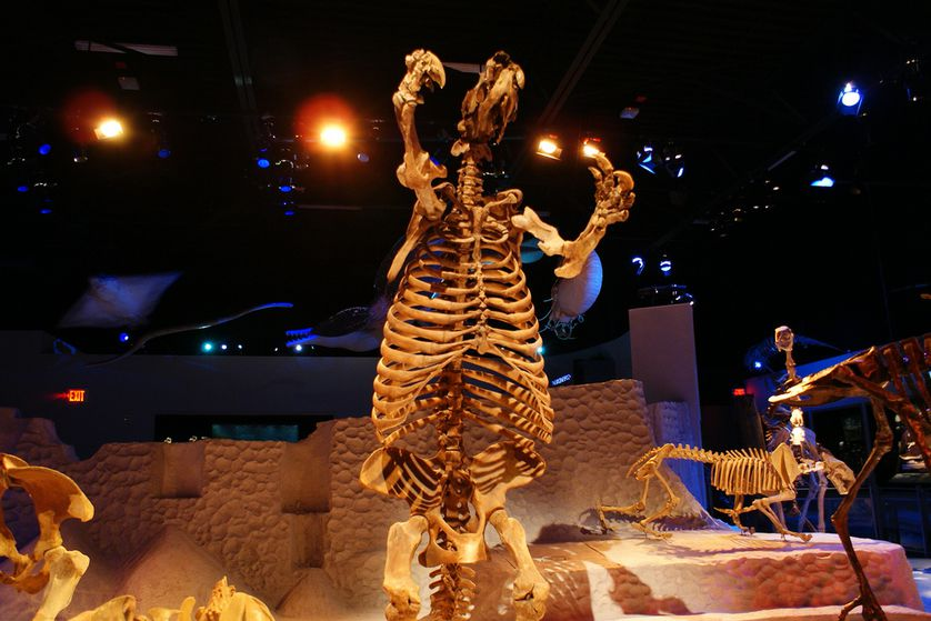 The ground sloth stretched 20 feet long and weighed up to 9,000 pounds. (Photo: Dallas Krentzel/flickr)