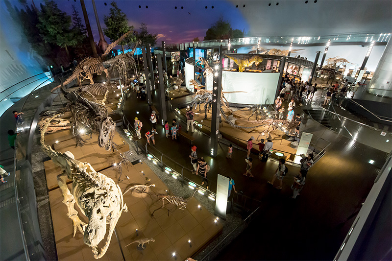 The museum's Dinosaur World section features 44 complete skeletons, placed among the Dino Theater's 200-inch screen, a diorama introducing Chinese dinosaur finds, and exhibits on the creatures of Japan and the rest of Asia.