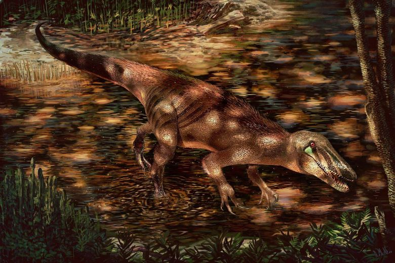 The newly discovered predatory dinosaur, Tratayenia rosalesi, is shown in this handout illustration crossing a stream in what is now Patagonia, Argentina, roughly 85 million years ago. PHOTO: REUTERS