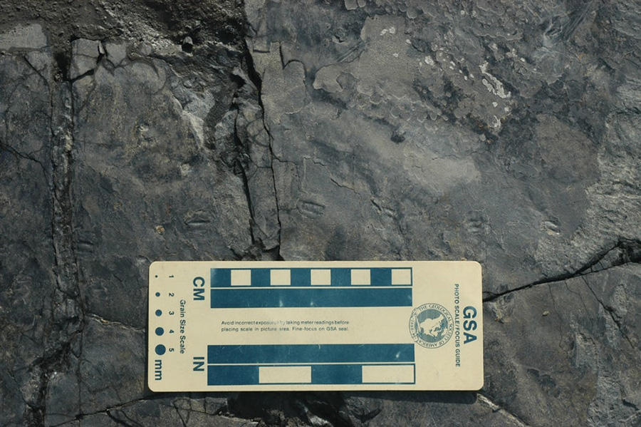 The tiny new dinosaur tracks were found in the Jinju Formation in South Korea(Credit: Prof Kyung Soo Kim)