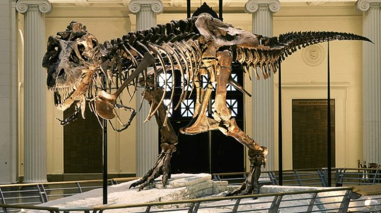 The world's biggest version of the world's most famous dinosaur: 'Sue', the T.rex