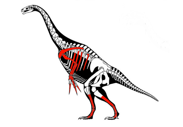 Therizinosaurus cheloniformis by Scott Hartman
