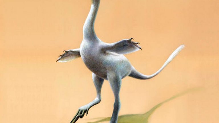 This illustration provided by Lukas Panzarin, with Andrea Cau for scientific supervision, shows a Halszkaraptor escuilliei dinosaur. The creature, about 18 inches 45 centimeters) tall, had a bill like a duck but teeth like a croc's, a swan-like neck and killer claws.