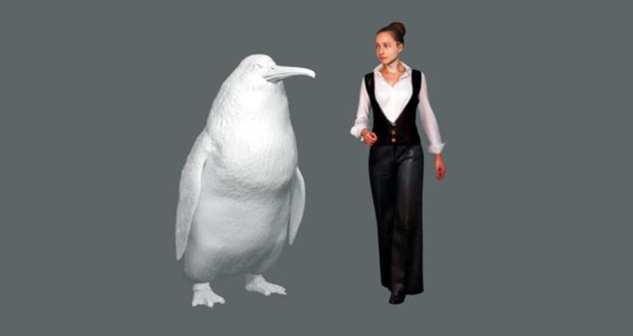 "This illustration provided by the Canterbury Museum, shows the approximate height of a giant penguin, a ""crossvallia waiparensis"" next to a human being."