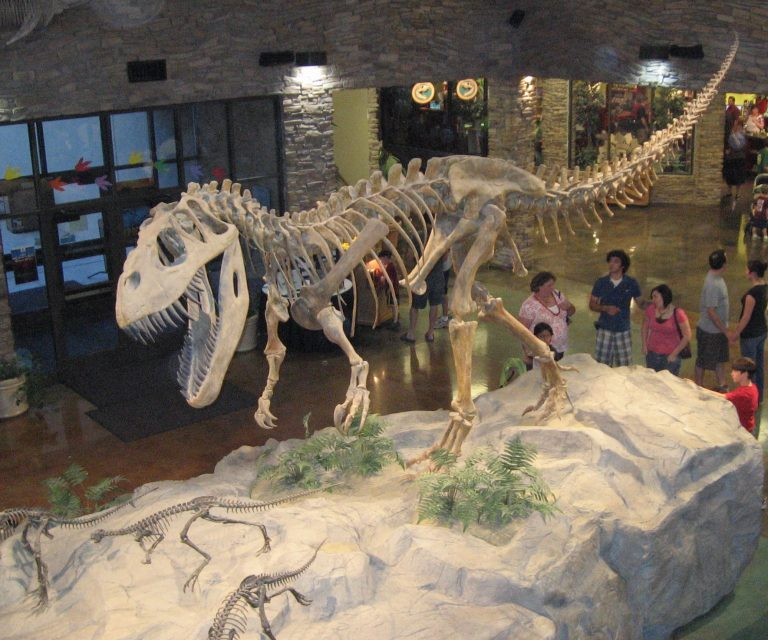 This is the main lobby of the Museum of Ancient Life at Thanksgiving Point in Lehi, Utah, U.S.A. It displays a depiction of a Torvosaurus dinosaur skeleton pursuing a herd of Othnielosaurus. Author leon7