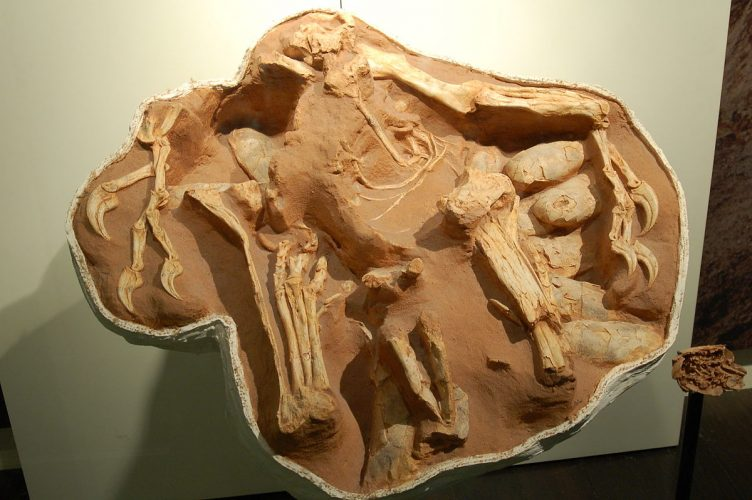 This oviraptorid dinosaur, Citipati osmolskae, may have been protecting a nest of eggs.