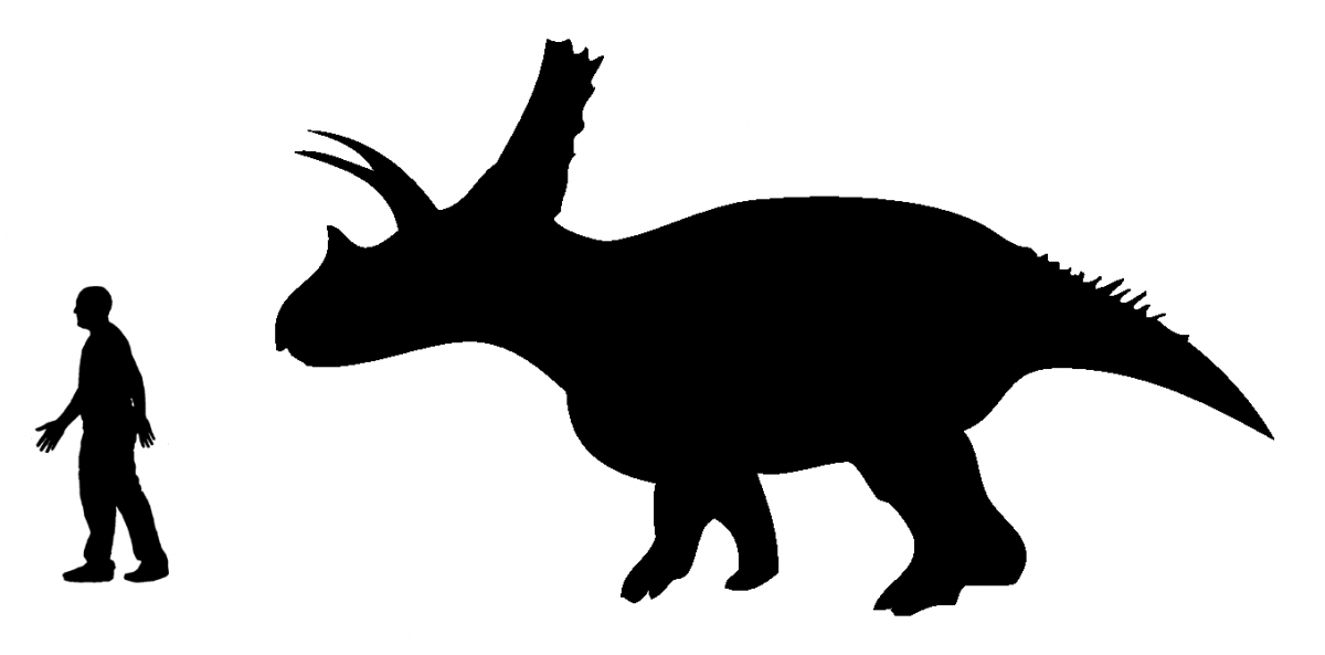 Size comparison of the derived chasmosaurine ceratopsian Titanoceratops and the human by Andrew A. Farke.