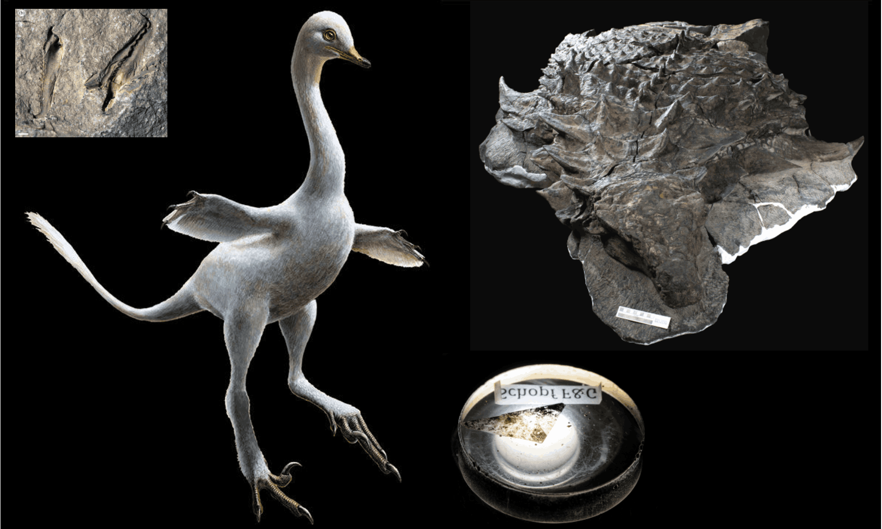Some of the best fossils of 2017. Composite: WILLIAM GRAF, University of Wisconsin – Madison/Erikkson et al 2017/Lukas Panzarin/Andrea Cau/Royal Tyrrell Museum of Palaeontology