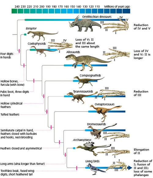 Transitional Fossils & Transitional Forms