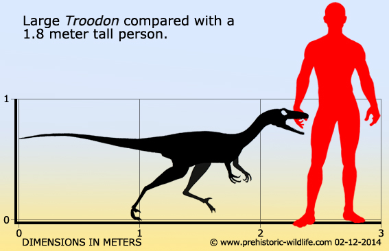 Troodon by Prehistoric-Wildlife.com