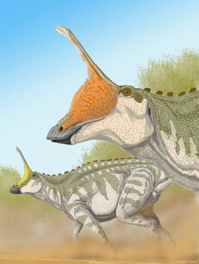 An old style restoration of Tsintaosaurus by ДиБгд, with inflatable sacs at the base of the spike. Image from Wikimedia Commons.