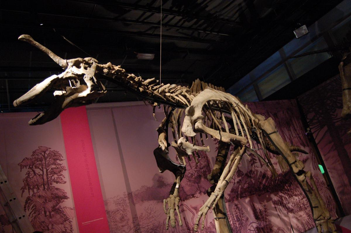 Tsintaosaurus skeleton. National Geographic