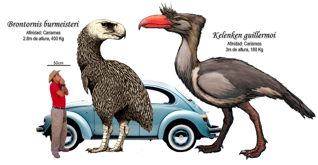 Two big South American Terror Birds (Phorusrhacidae) by Roberto Díaz Sibaja